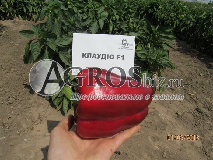Семена перца Клаудио F1 1000 шт - фото 8114