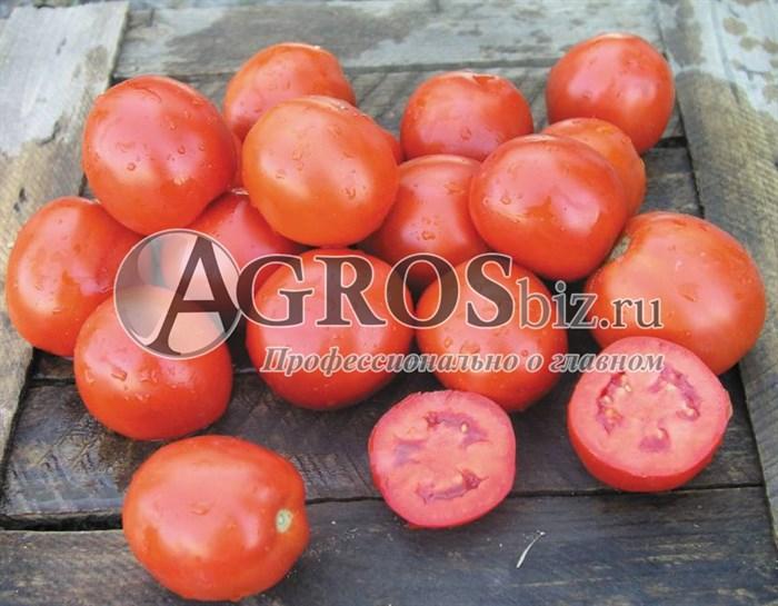 Семена томата Вулкан F1 1000 шт - фото 8963