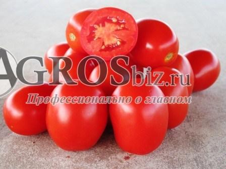 Семена томат Адванс F1 1000 шт - фото 8964