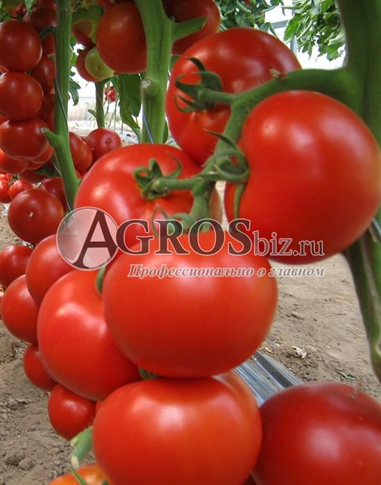 Семена томата Бостина F1 500шт - фото 9365