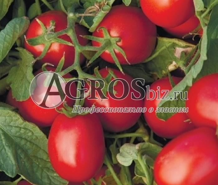 Семена томата Астерикс F1 2500шт - фото 9370