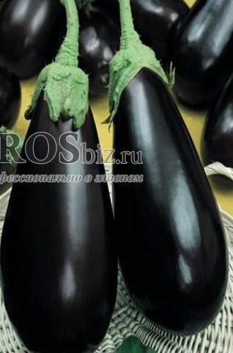 Семена баклажана Блек Перл F1 250 шт - фото 9379