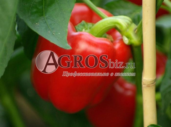 Семена перца Ред Барон F1 500 шт - фото 9405