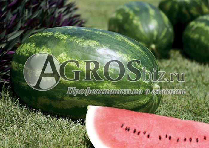 Семена арбуза Амфион F1 1000 шт - фото 9590