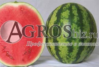 Семена арбуза Виктория F 1 1000 шт