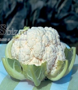 Семена цветной капусты Фламенко F1 2500 шт