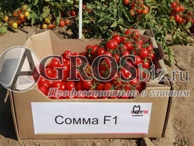 Семена томата Сомма F1 1000 шт
