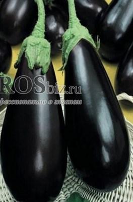 Семена баклажана Блек Перл F1 250 шт