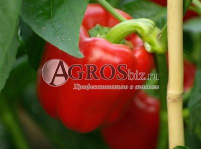 Семена перца Ред Барон F1 500 шт