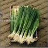 Семена лука на перо Параде 250 000 шт