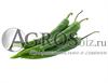 Семена перца острого Хайфи F1 250 шт - фото 8936