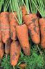Семена моркови Каскад F1 500 000 шт калибр 1,6-1,8 - фото 9065