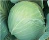 Семена капусту Новатор F1 2500шт - фото 9265