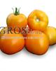 Семена томата  KS-17 F1 1000шт - фото 9320