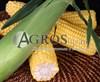 Семена кукурузы Оватонна  F1 5000 шт - фото 9533