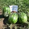 Семена арбуза Каристан F1 1000 шт - фото 9582