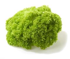 Семена салата типа Лолло Бионда (зеленый кучерявый)
