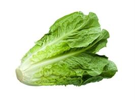 Семена салата типа Ромэн (Романо, римский салат)