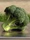 Семена капусты брокколи и брюссельской