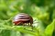 Инсектициды (препараты от вредителей)