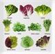 Другие виды салата