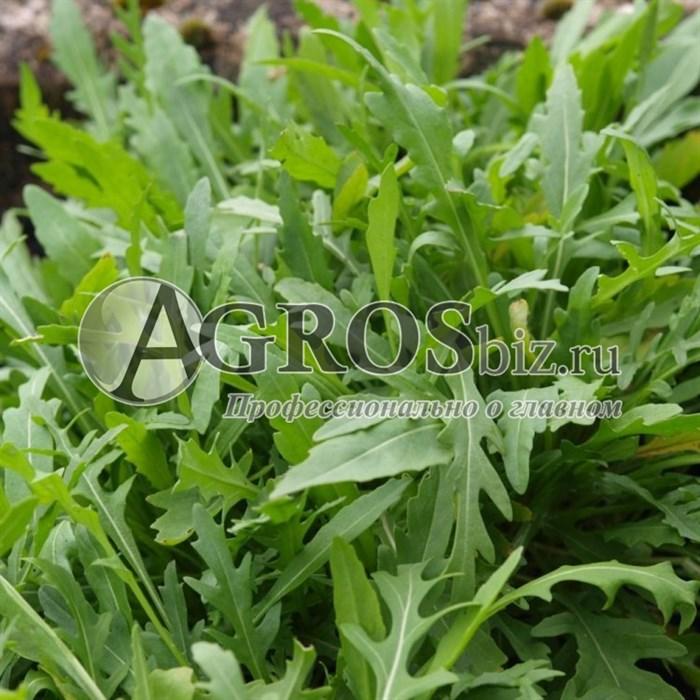 Семена руколы Грация 1000000 шт - фото 10089