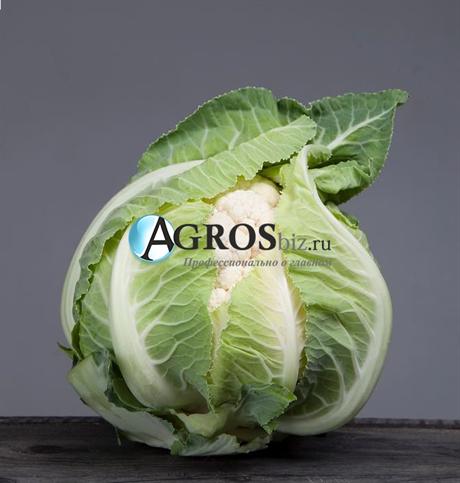 Семена цветной капусты Ардент F1 2500 шт - фото 10557