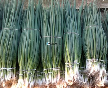 Семена лука на перо Тотем 500 г - фото 10570