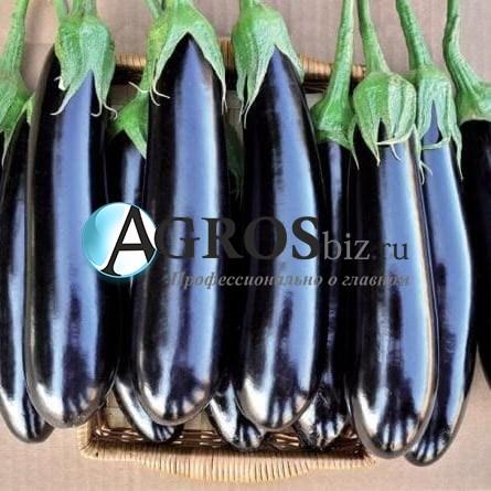 Семена баклажана Фаворит F1 1000 с - фото 10699
