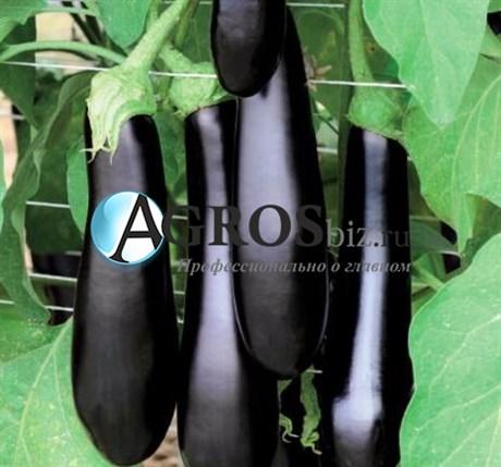 Семена баклажана Каратая F1 1000 c - фото 10703