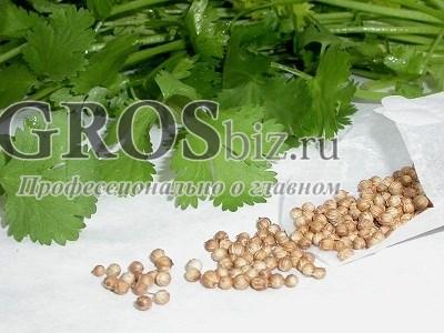 Семена кориандра Карибе 500 г