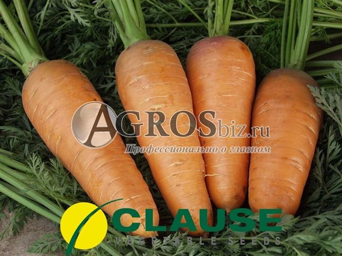 Морковь Болтекс (Клоз)