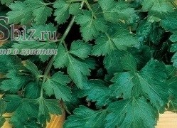 Семена петрушки Фитнес 250 г