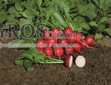Семена редиса Ровер F1 5 000 шт (калибр.2,75-3,00) - фото 8781