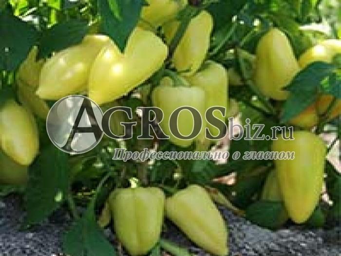 Семена перца Лотта F1 500 шт - фото 8810