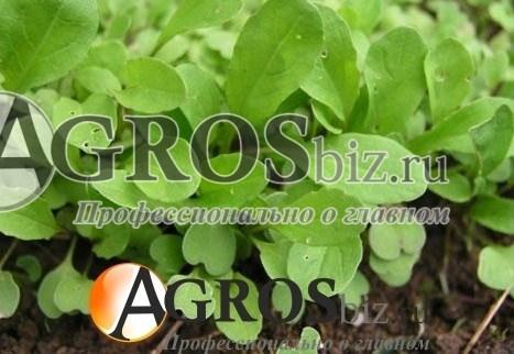 Семена руколы Колтивата 250г - фото 8867