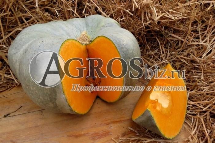 Семена тыквы Сампсон F1 500 шт - фото 8930