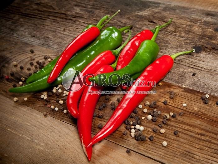 Семена перца острого Шакира F1 500 шт - фото 8935