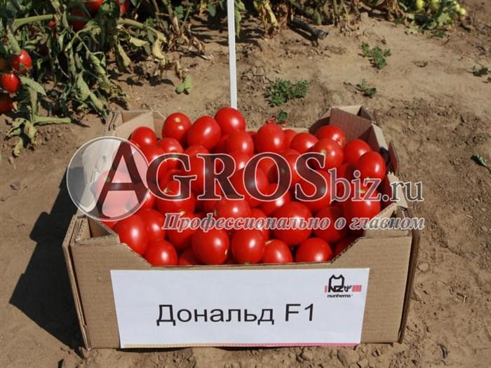 Семена томата Дональд F1 1000 шт - фото 8961