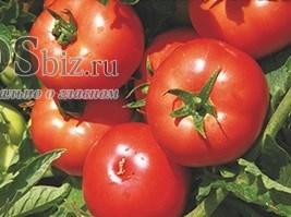 Семена томата Имран F1 1000 шт - фото 9115