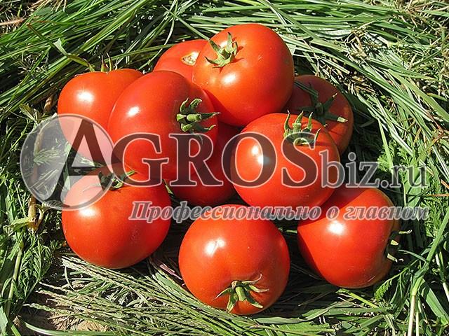 Семена томата Бехрам F1 1000 шт - фото 9137