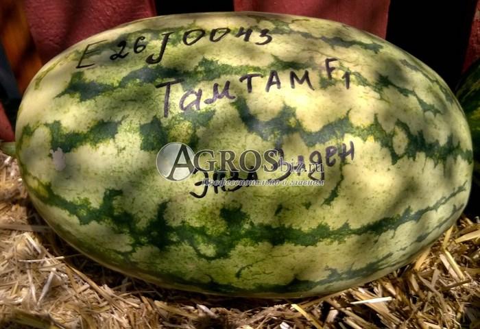 Семена арбуза Тамтам F1 1000 шт - фото 9168
