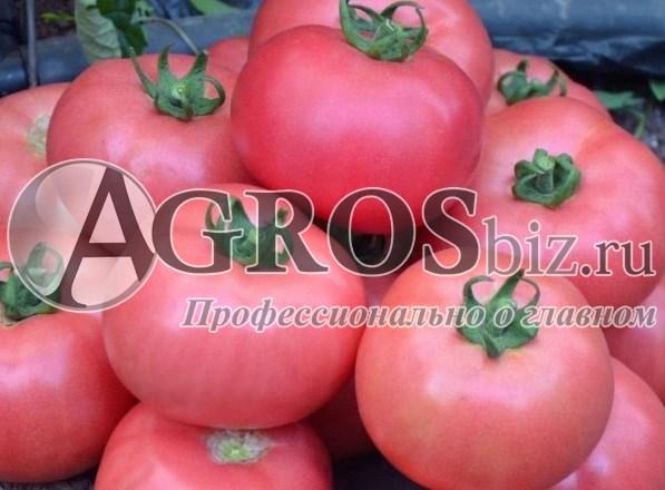 Семена томата Димероза F1 500 шт - фото 9173