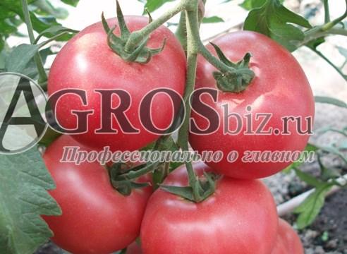 Семена томата Пинк Шайн F1 500 шт - фото 9174