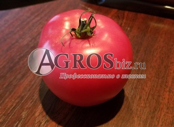 семена томата Пинк Трит F1 500 шт - фото 9181