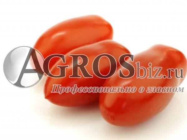 Семена томата Торквей F1 5г - фото 9307