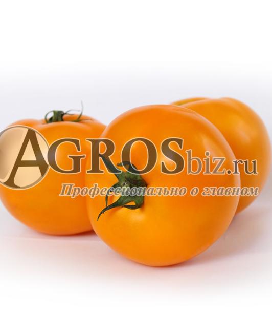 Семена томата KS-10 F1 100шт - фото 9324