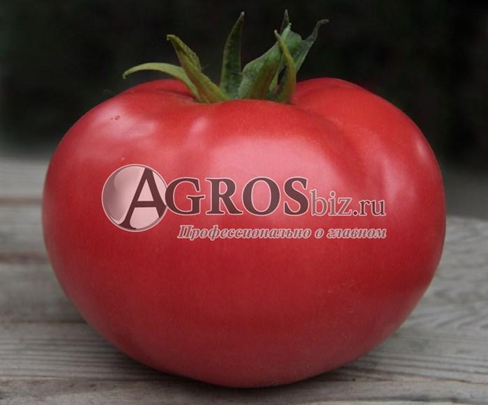Семена томата Кибо F1 250 шт - фото 9355