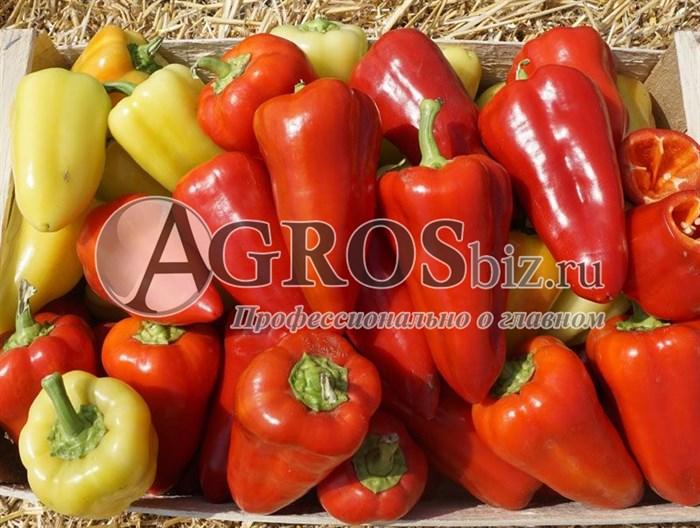 Семена перца Анетта  F1 500 шт - фото 9396