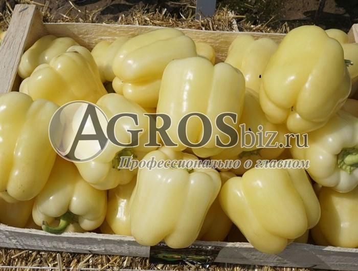 Семена перца Бланчина F1 500 шт - фото 9459